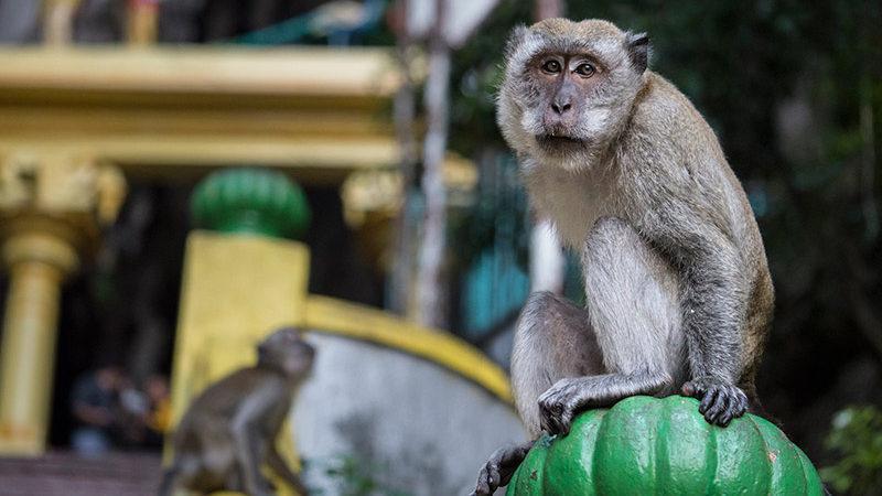 گشت و گذار در غار میمون های مالزی