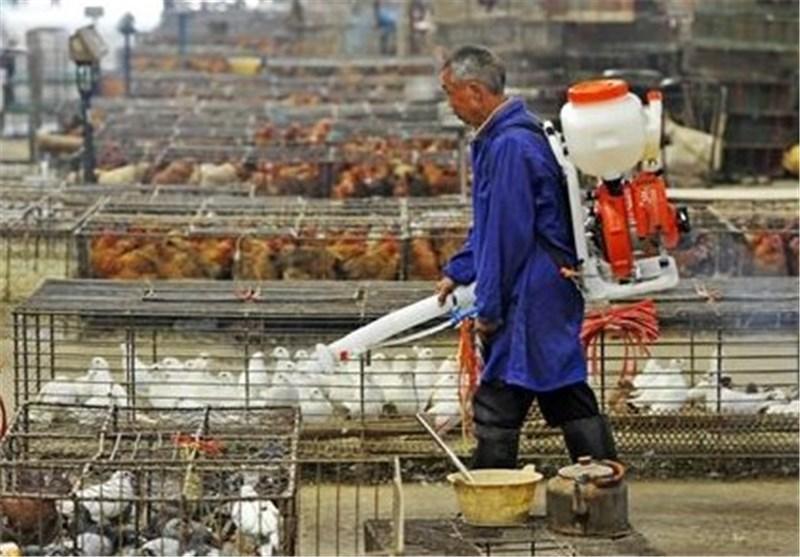 تدابیر ویژه ویتنام برای جلوگیری از شیوع آنفولانزای مرغی