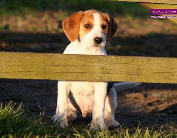 تربیت و نگهداری سگ خانگی (2)